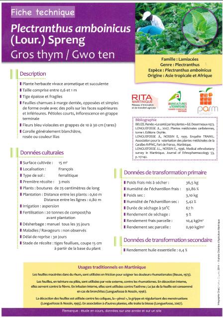 Gros thym gwo ten plectranthus amboinicus chambre d - Chambre agriculture alpes maritimes ...