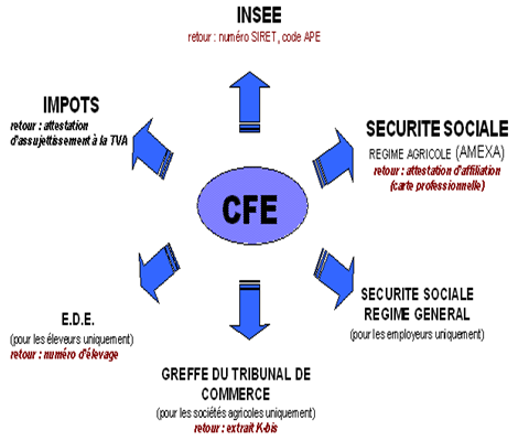 Formalites D Entreprise Site Institutionnel Martinique